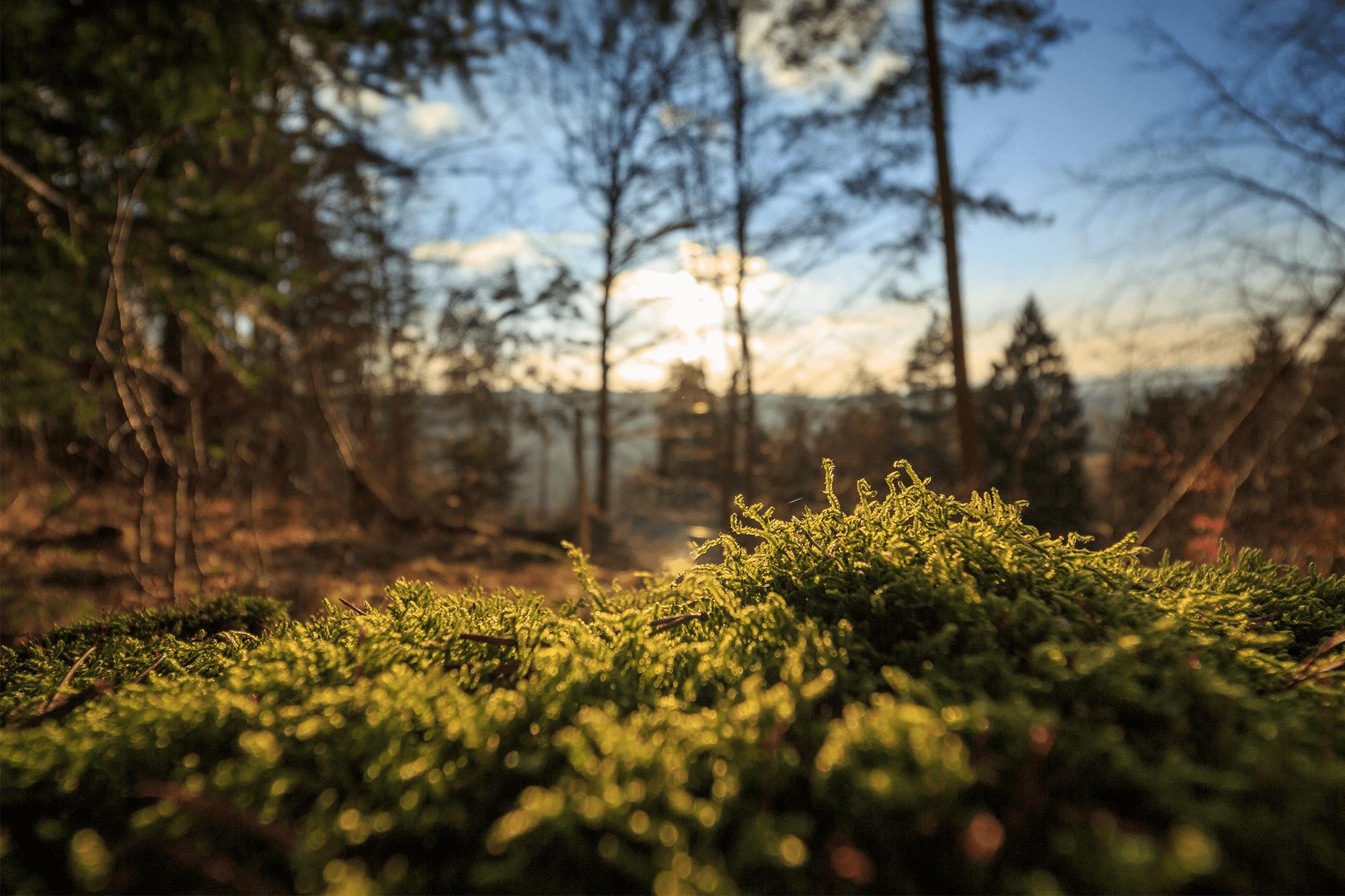 VDI et écologie